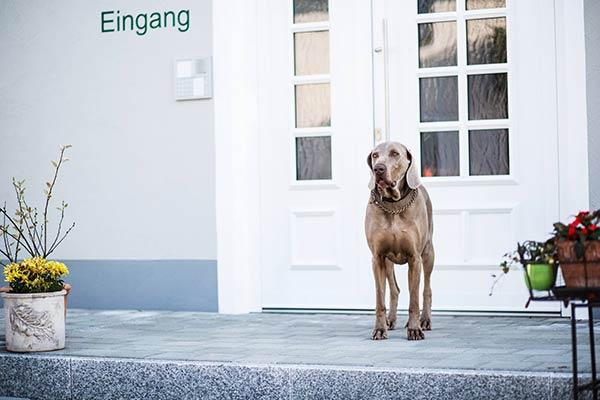 hund_barfusspark_draussen